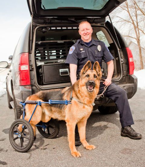 Injured police dog