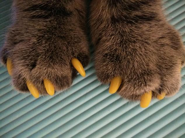 The social media fad for colourful cat and dog claws.