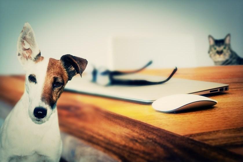 Dog, cat, desk
