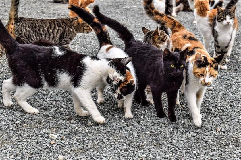 Stray Cat colony