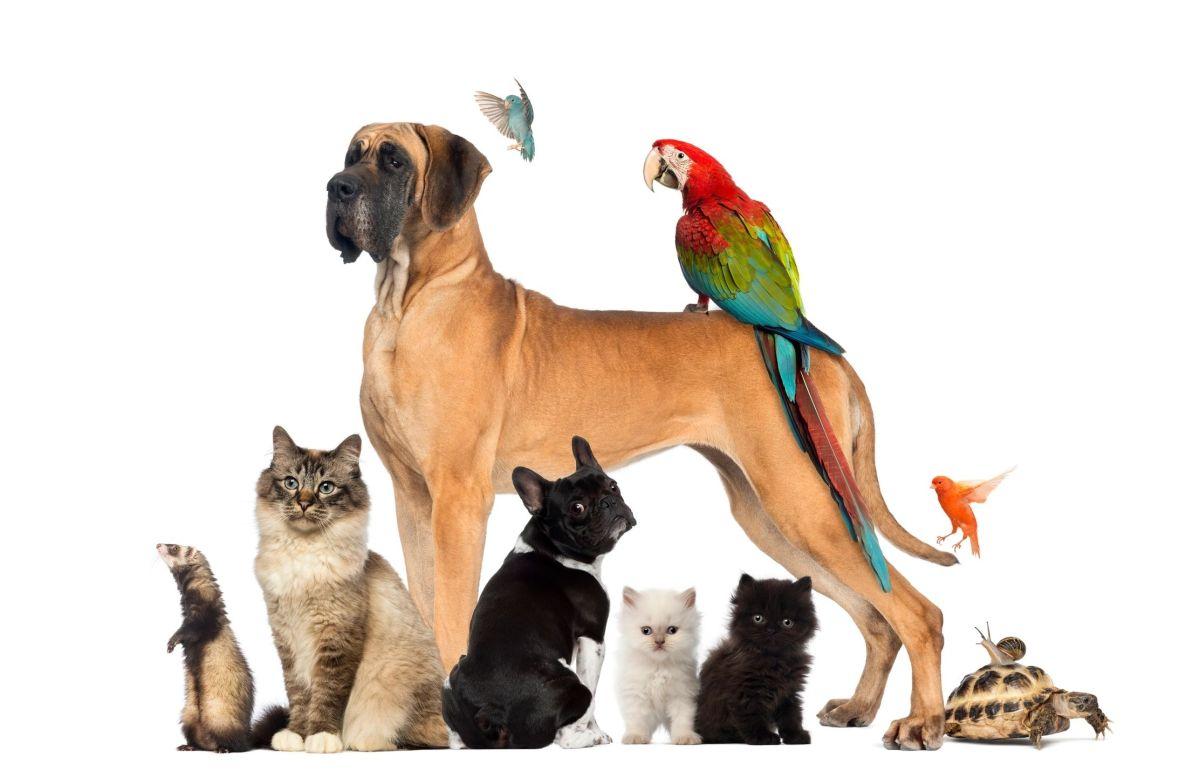 What is the definition of a suitable pet?