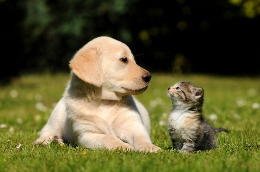 Puppy and kitten together
