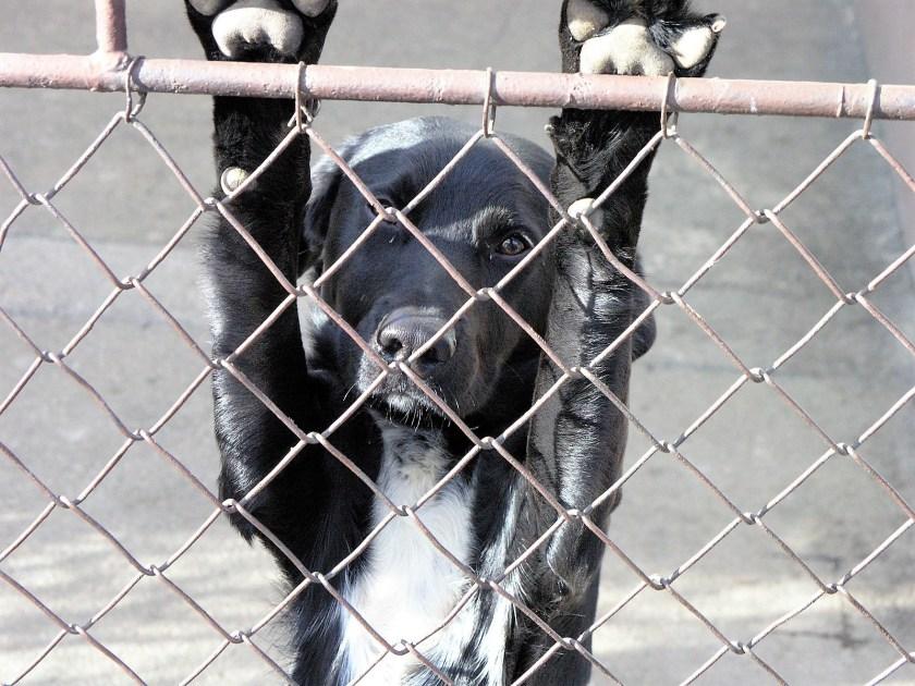 Unwanted dog, rescue dog