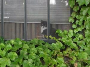 Indoor cat at window