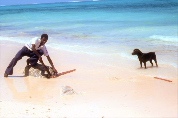 Condor of the Humane, Bahamas Humane Society, Condor on the beach