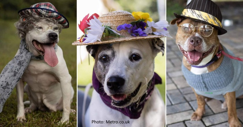 dressing up dogs animal rights