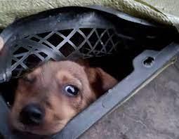 China animal blind box