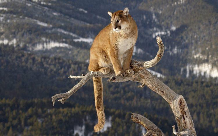 Cougars a mláďatá datovania on-line