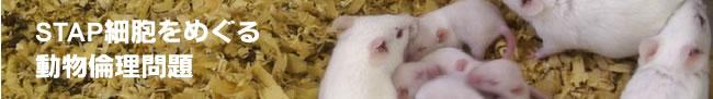 stap細胞 動物愛護の観点から