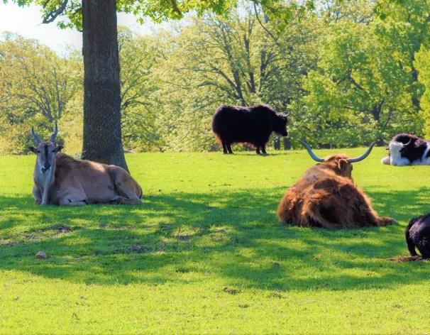 Relaxed Bulls