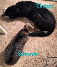 choppy-and-schooner copy