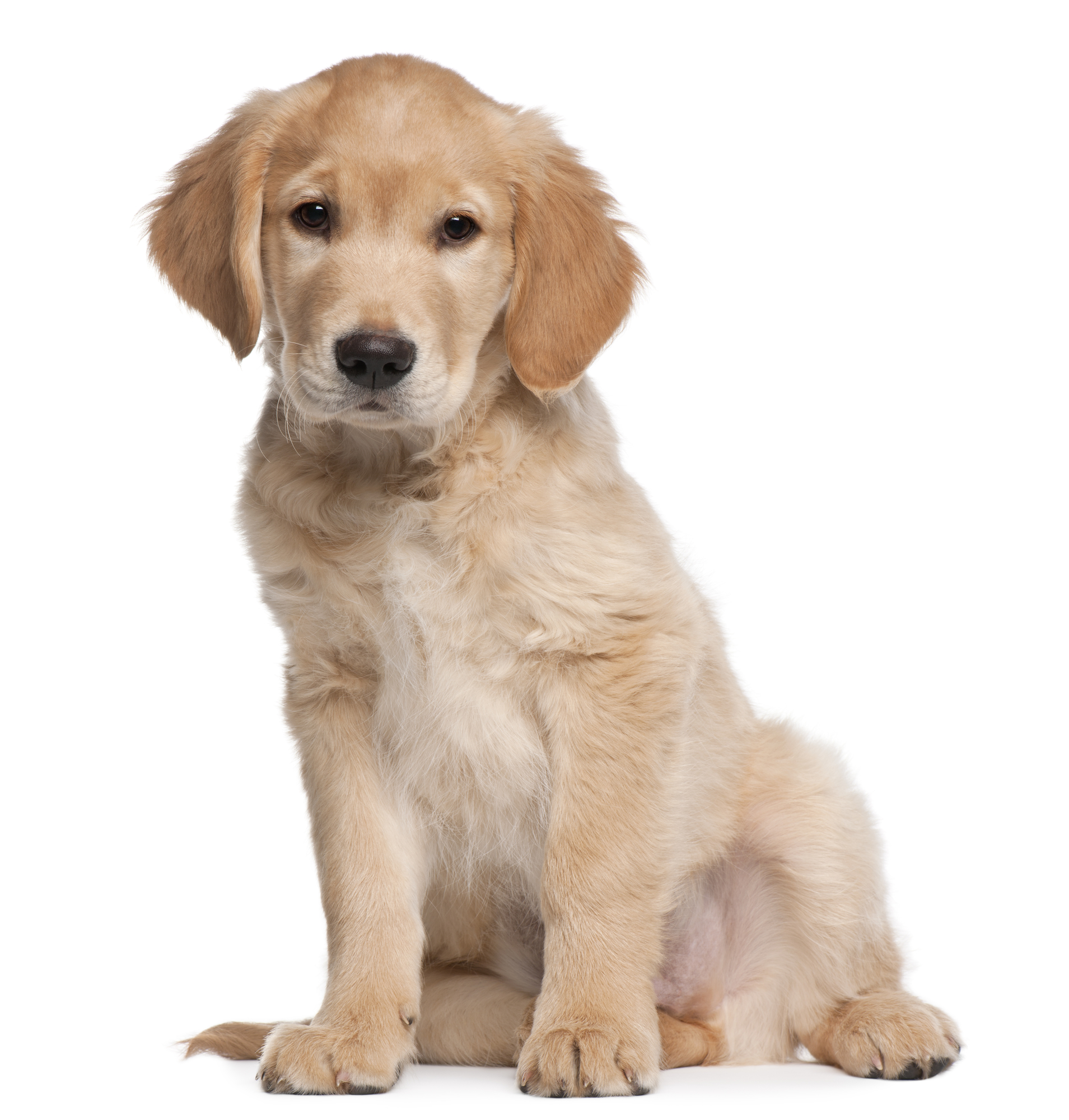 Smart Pune Billy Is An Gen Retriever Who Develops Between Visits To