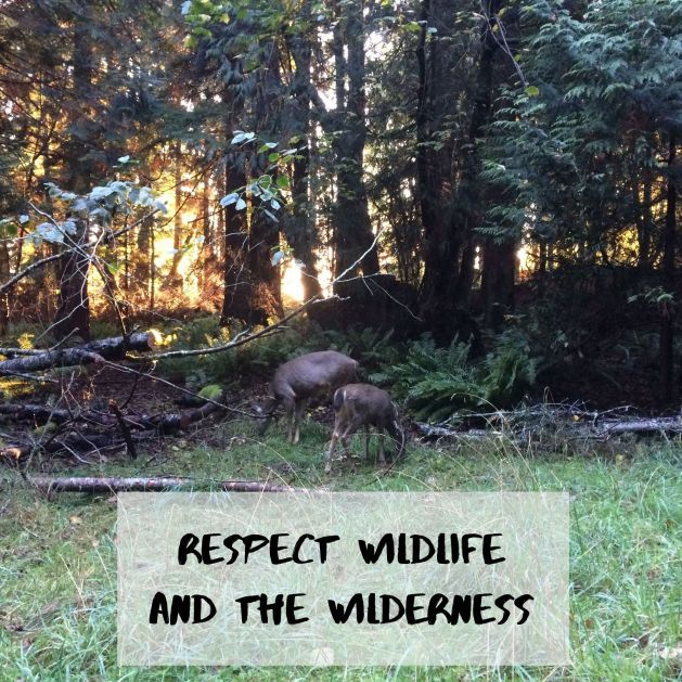 Respect wildlife and the wilderness