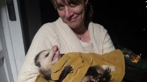 Possum Trapped in Johns Creek