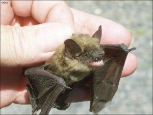 alpharetta bat