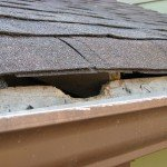 Damage a Squirrel can do in an attic