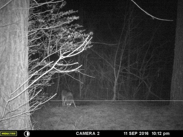 coyote control johns creek
