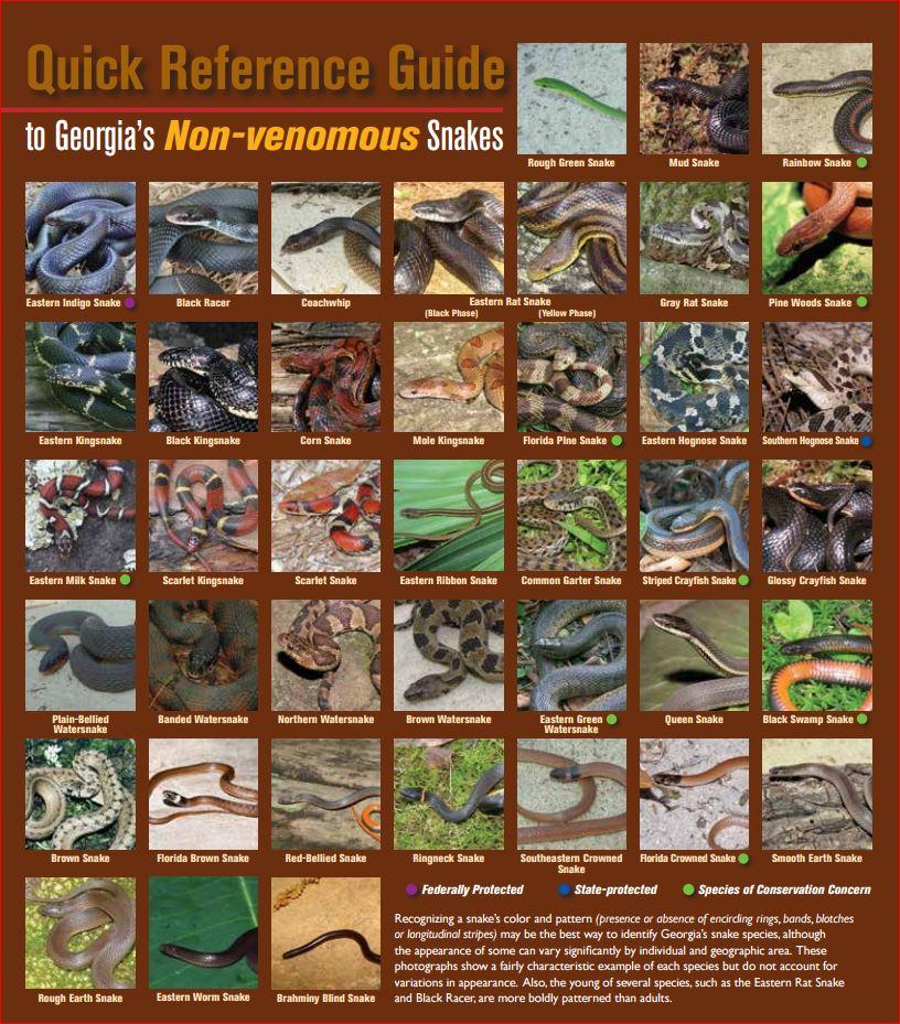 non-venomous snakes