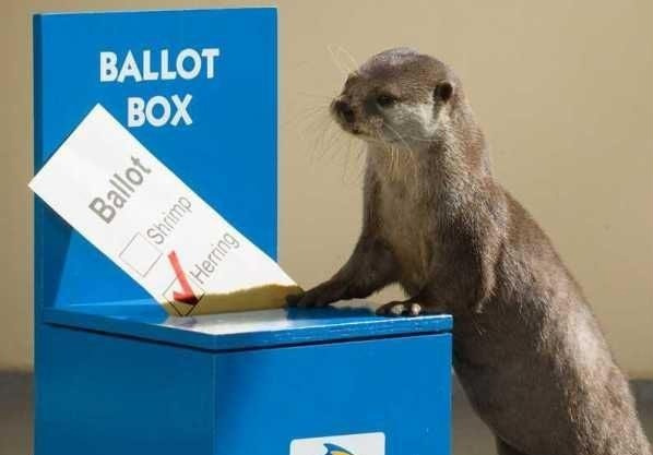 Image result for animal election