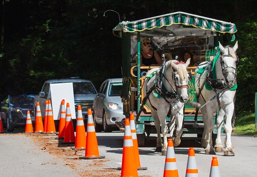 Horse-drawn trolley at Stanley Park creating stress on the horses and being a traffic hazard for others on the road.