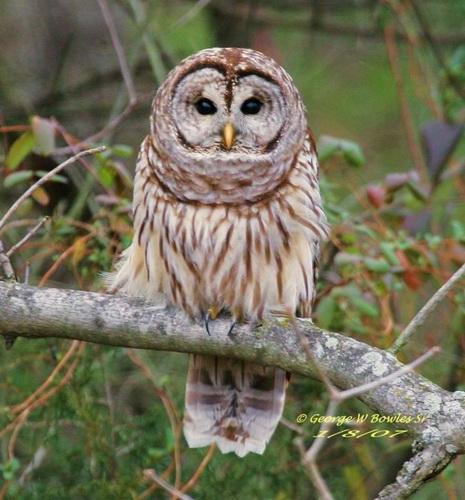 https://i1.wp.com/animalworld.com.ua/images/2009/April_09/Foto/Owl/Owl_20.jpg