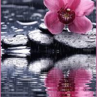Орхидея под дождем анимационная картинки гифки Цветы ...