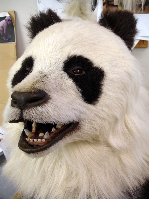 Head detail of animatronic panda suit