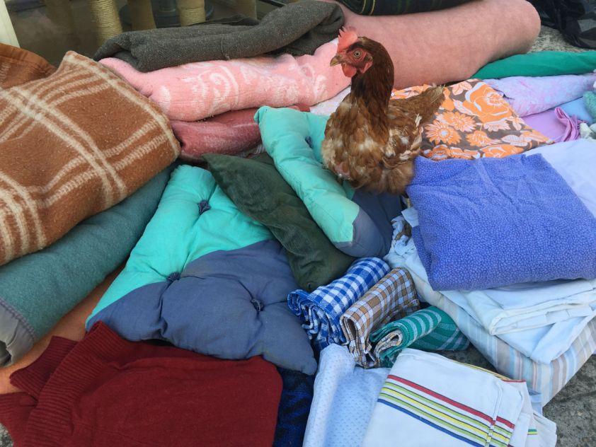 Don couvertures Sylvie