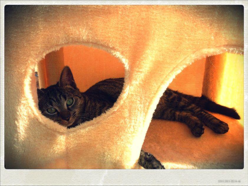 Arbre à chat 1