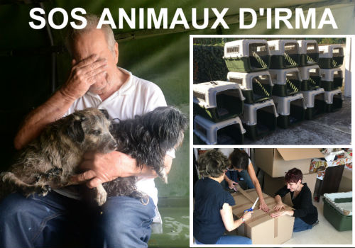 02_SOS Animaux victimes d'Irma_grand