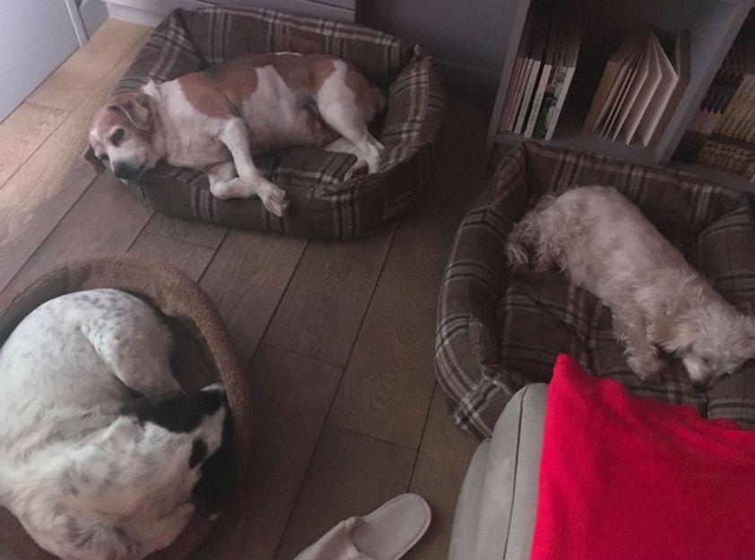 04 La sieste avec Doug et Esmeralda