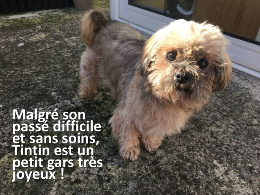 Tintin 4