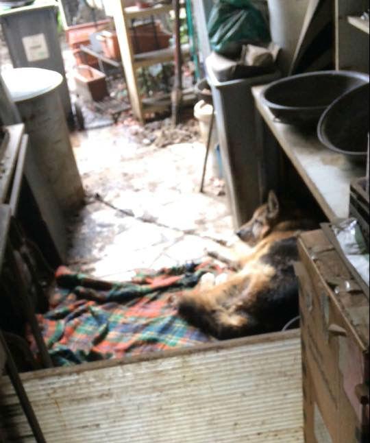 Il vivait là. Enchaîné. Essayant de se protéger de la pluie sous une planche. Séparé du béton par un tissu imbibé d'urine.