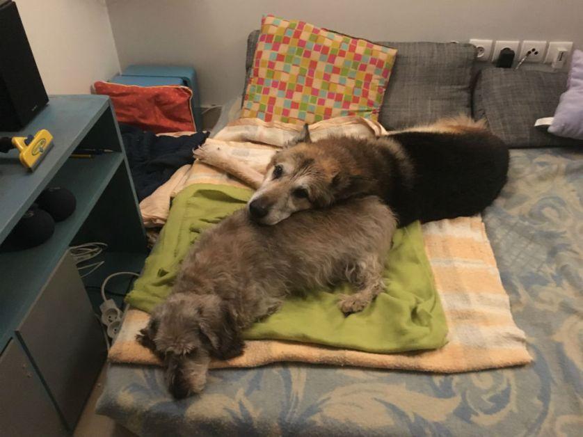 Le soir même, sur la douceur d'un premier lit matelassé, son regard a changé. Et il s'est pris d'amitié pour Didi, qu'il ne lâche plus depuis !