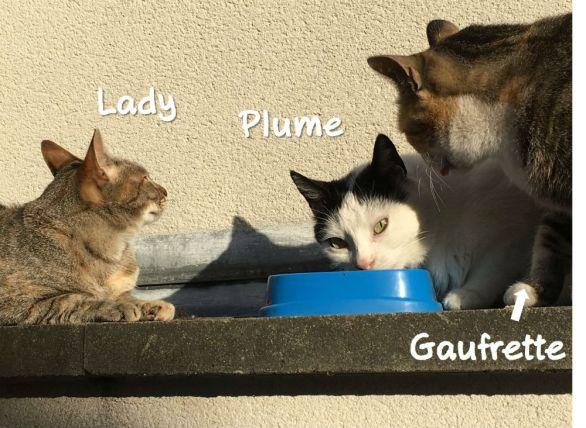 Mais même si Plume sort toujours victorieuse quand il s'agit de lutter pour son Brahms, elle reste copine des autres minettes, dont sa rivale Gaufrette.
