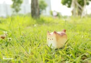 warmly-baked-the-breadcat-fotonew5