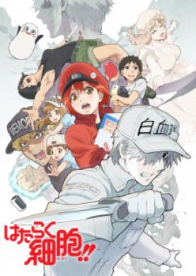 انمي Hataraku Saibou 2nd Season الحلقة 8 مترجمة اون لاين