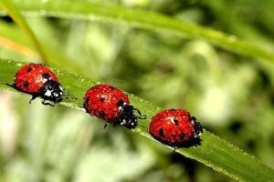 lady-bugs-ladybugs-32773963-1800-1200
