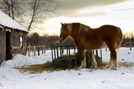 fourrage cheval