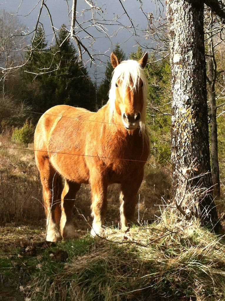 cheval (25)