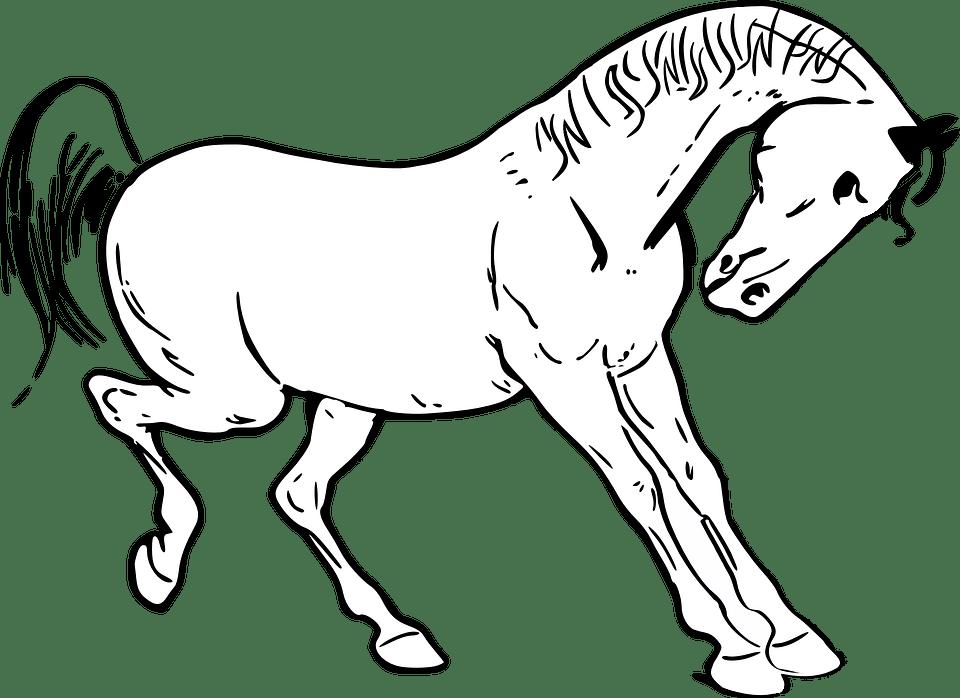 Dessin de cheval - Chevaux dessins ...