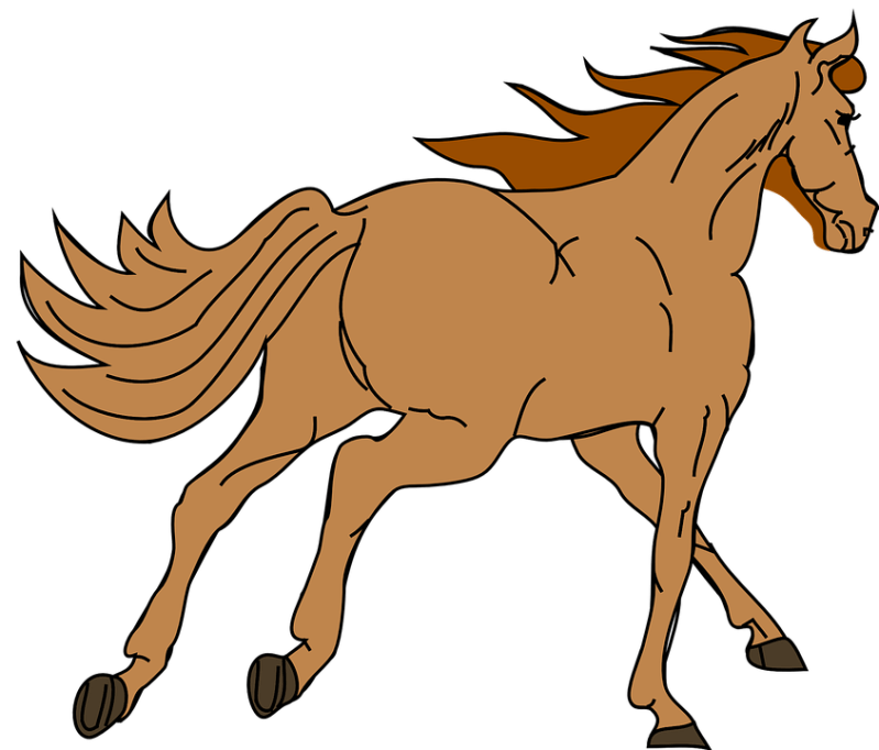 cheval (7)