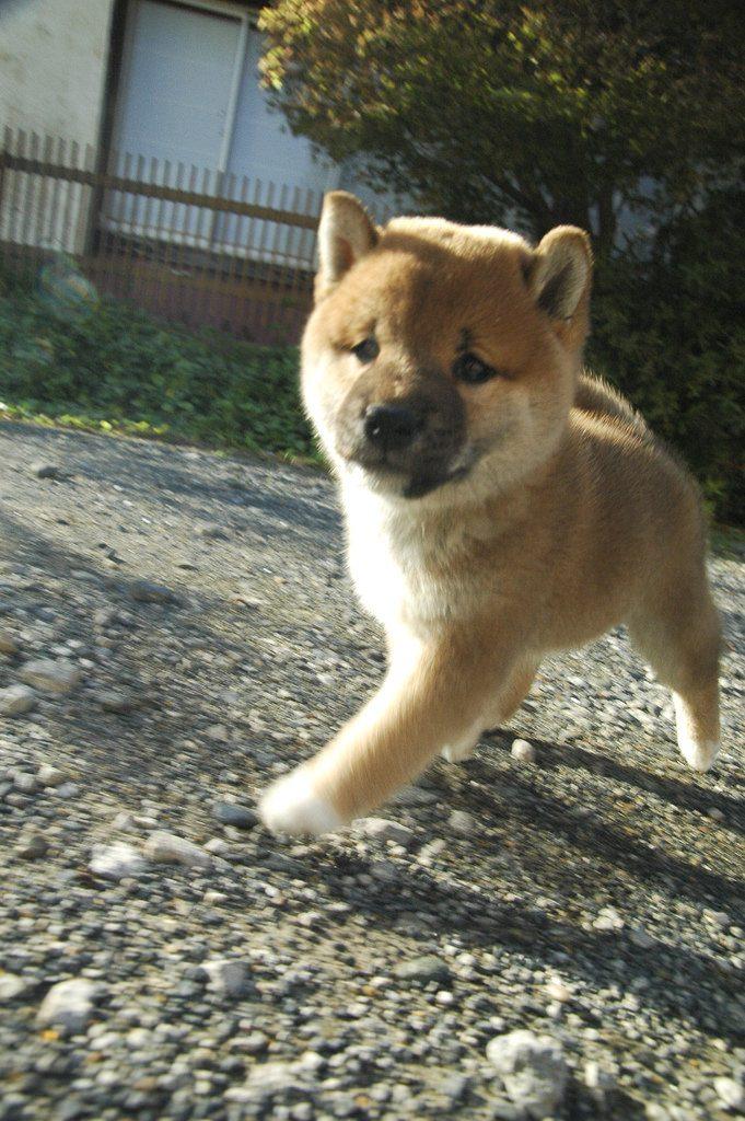 chien (18)