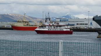 Whale Viewing Boat iceland