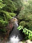 Waterfall Locarno Woods