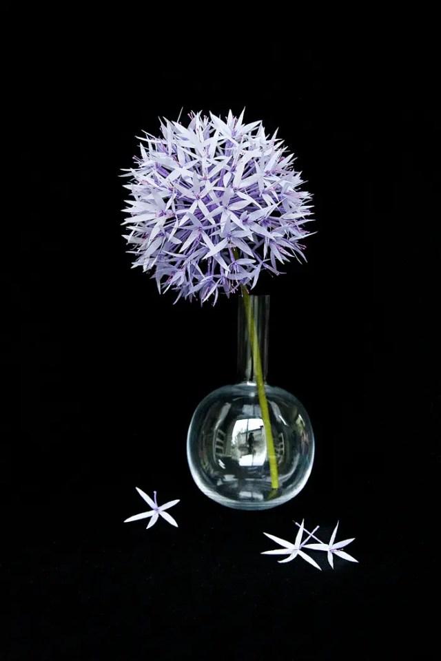 APaperAllium-05