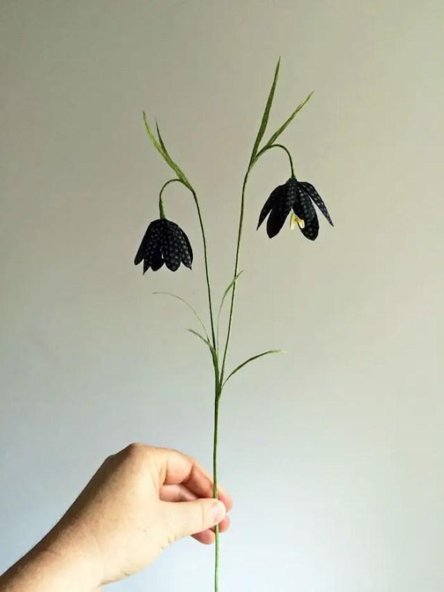black fritillaria stem