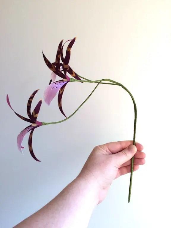 brassica stemw ith three flowers