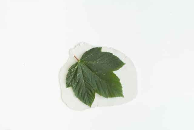 leaf-catchall-dish-3-668x446