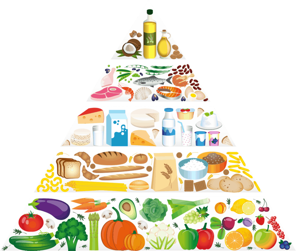 Picture of Food Groups in Pyramid